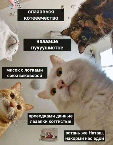 Коты и Наташа
