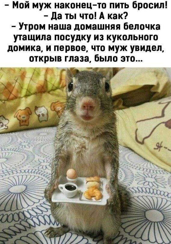 """Мем о """"белочке"""""""