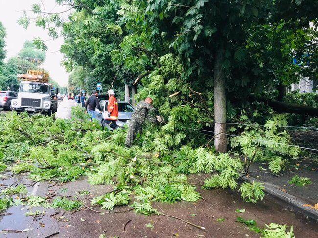 Дерева повалило від вітру.