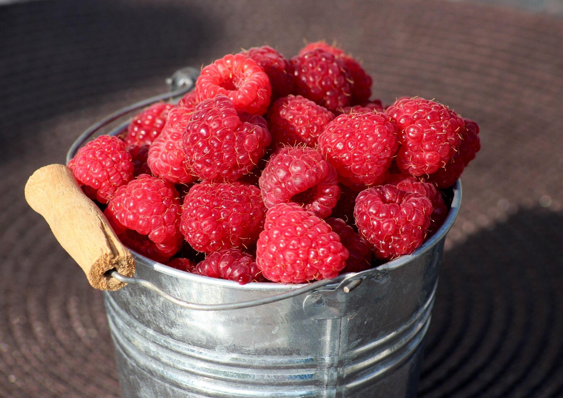 На Кузьму и Демьяна также собирают ягоды – малину и крыжовник