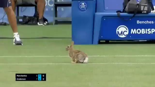 Заєць на матчі.