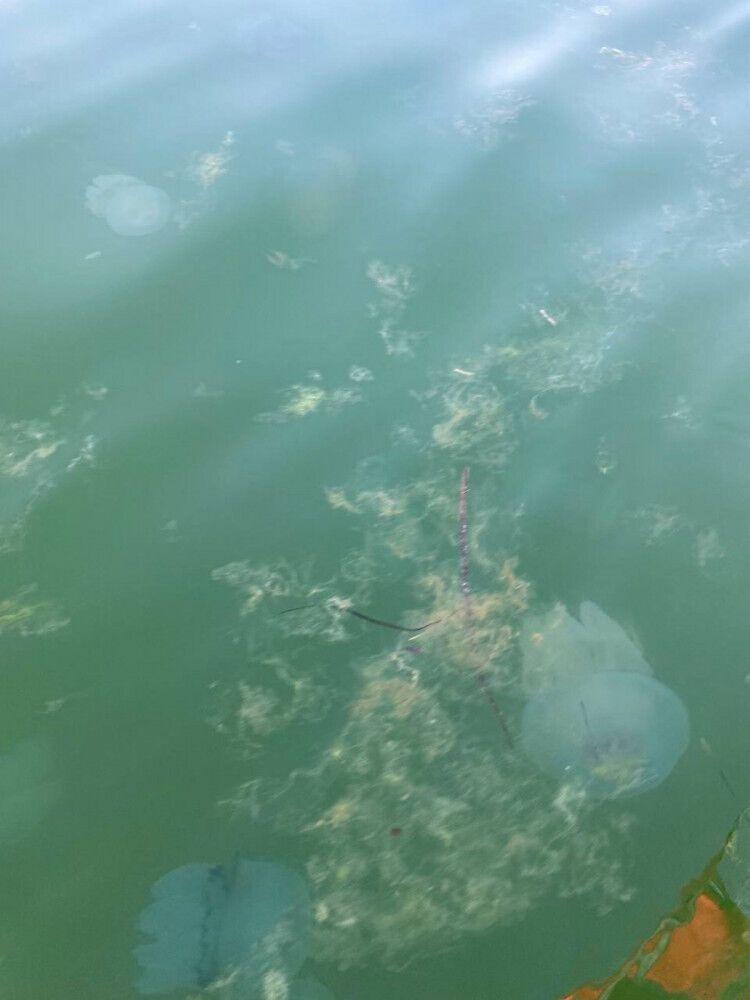 В Азовском море много водорослей и медуз.