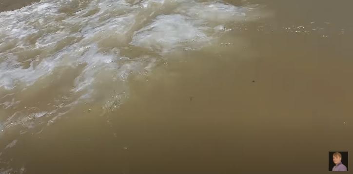 В Азовському морі блохи плавають у воді