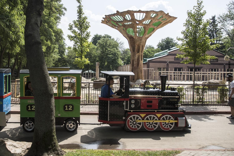 У Київському зоопарку 15 липня відзначають День слона