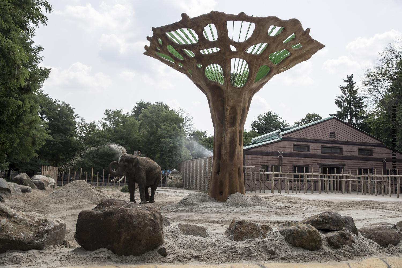 Оновлений вольєр для слона у Київському зоопарку