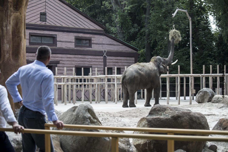 Незважаючи на пандемію коронавірусу, роботи з реконструкції зоопарку продовжуються