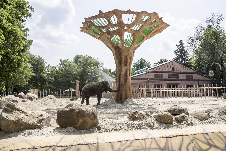 Завдяки тому, що зоопарк став привабливішим і зручнішим, збільшилась кількість його відвідувачів