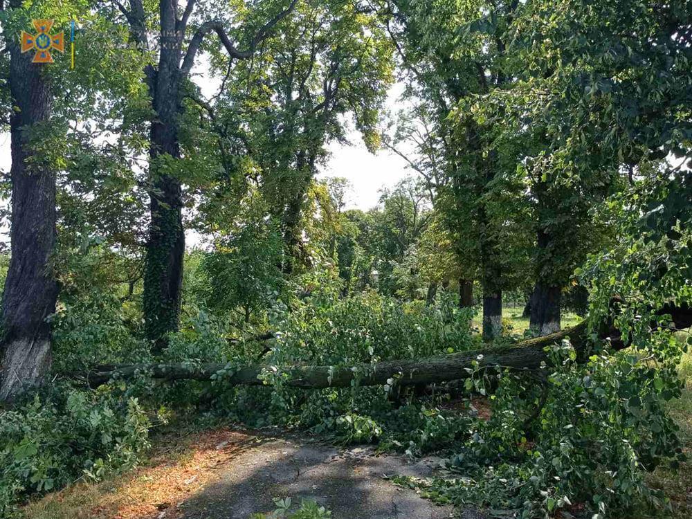 Торнадо повалив дерева.
