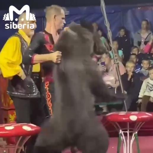 Нападение циркового медведя.