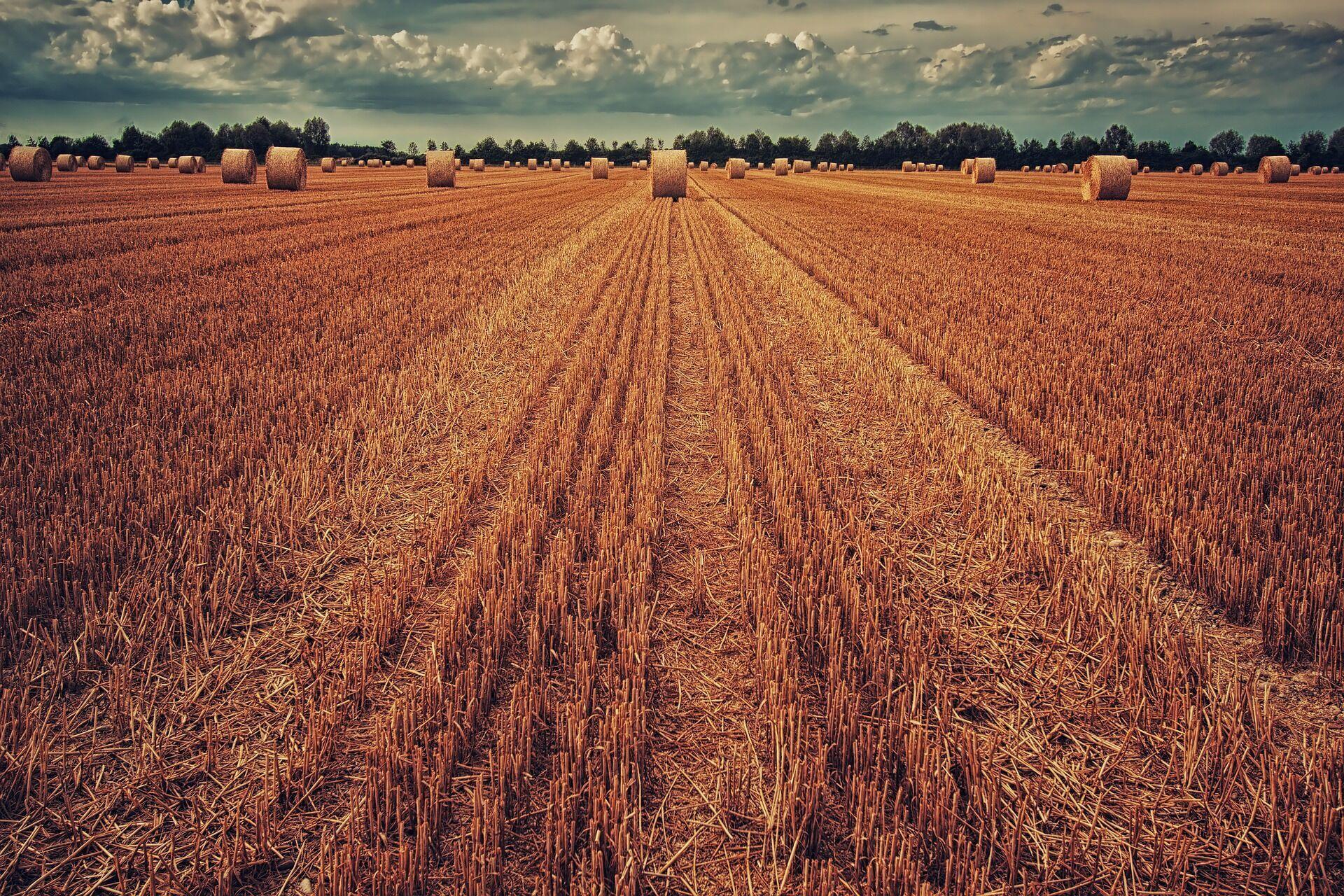20 июля стоит сжать и освятить первый сноп сена