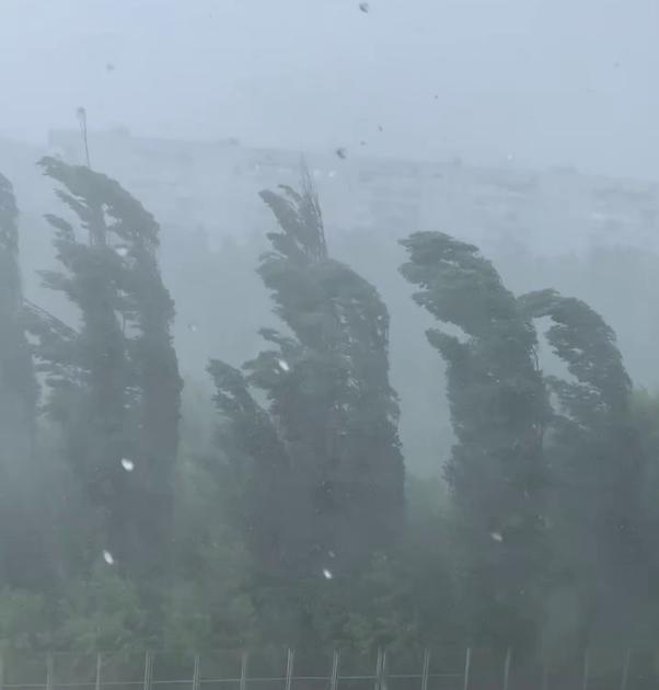 Ураган валил деревья
