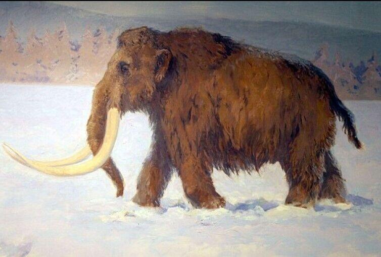 Шерстистий мамонт – одна з найбільш вивчених доісторичних тварин