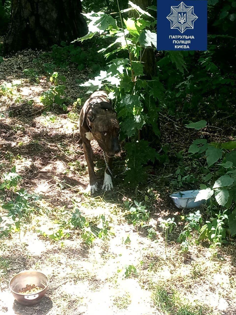 У Києві собаку прив'язали до дерева і покинули на спеці .