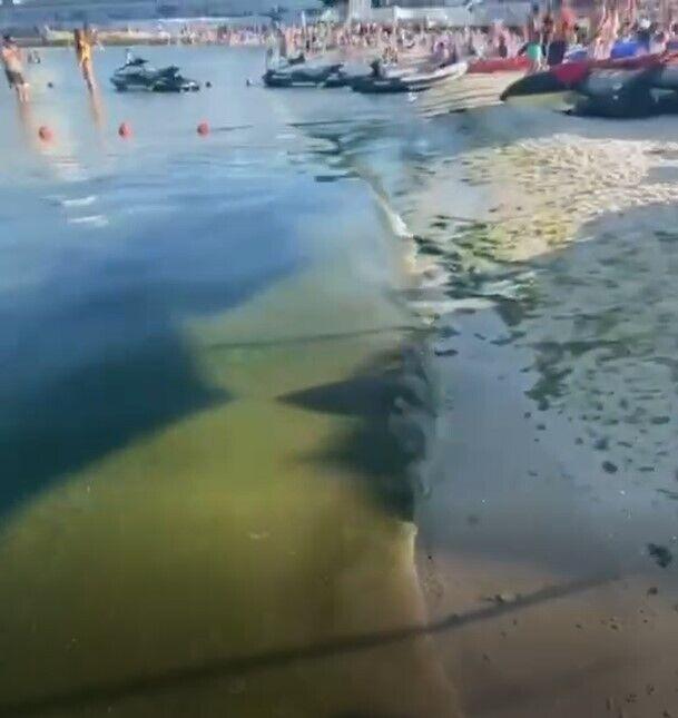 """Черное море стало """"зеленым"""""""