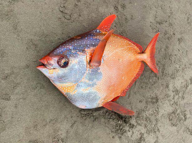 Рыба умерла на пляже