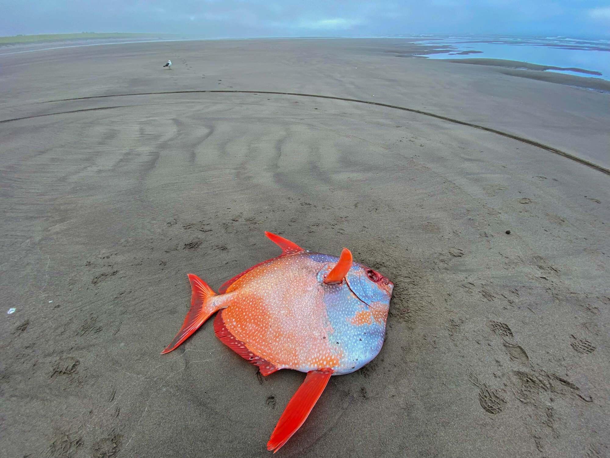 Рыба весит 45 кг