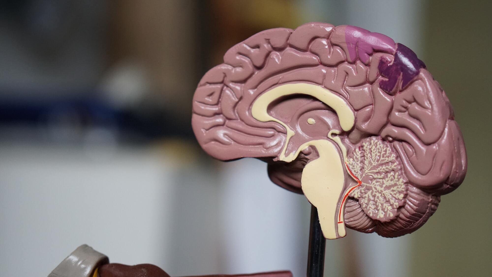 У середньому ми використовуємо свій мозок на 90%