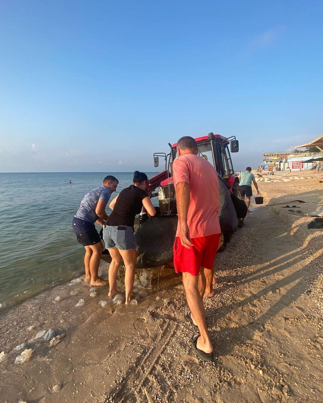 Медуз вывозят трактором
