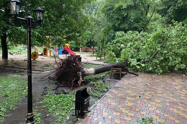 Поваленное дерево в Одессе