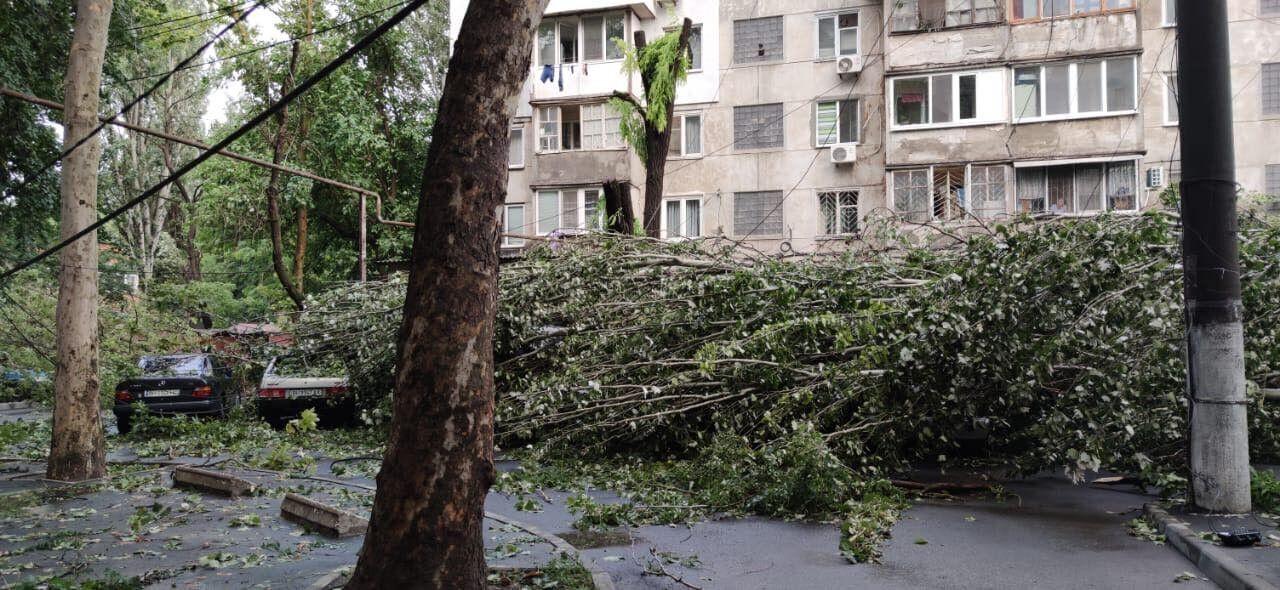 Деревья упали на авто