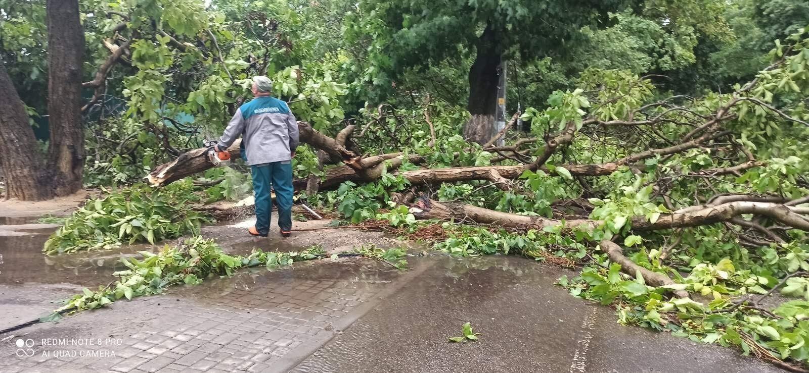 Поваленные деревья в городе