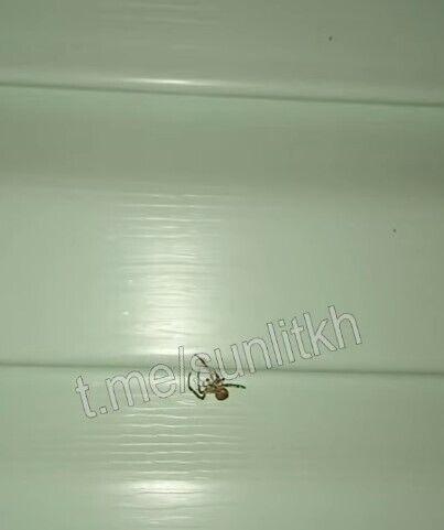 Почалася навала павуків у Кирилівці.