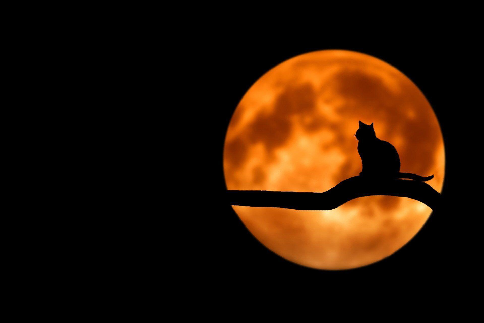 Золотий повний місяць настане 24 липня о 5:37 за Києвом