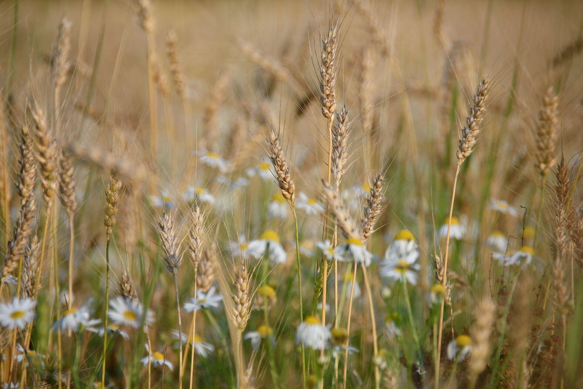 Выходить в поле на Владимира считается грехом