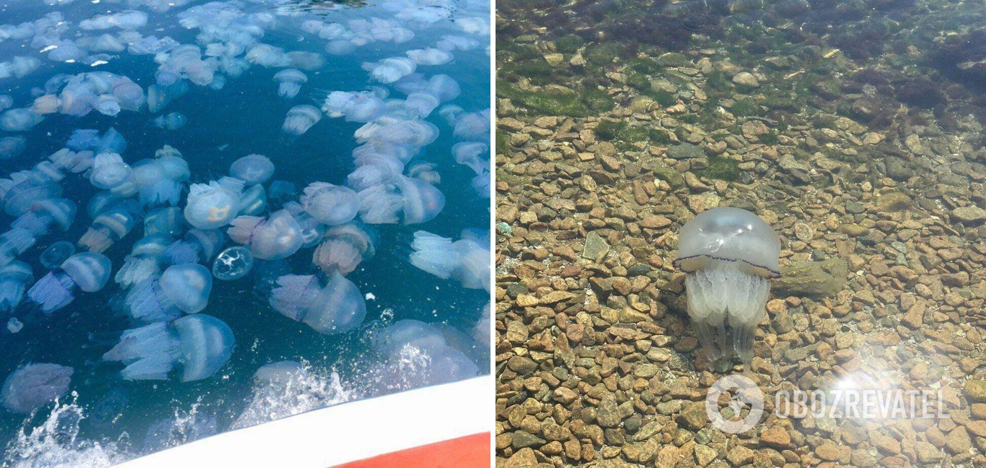 Відпочинок із медузами 2021