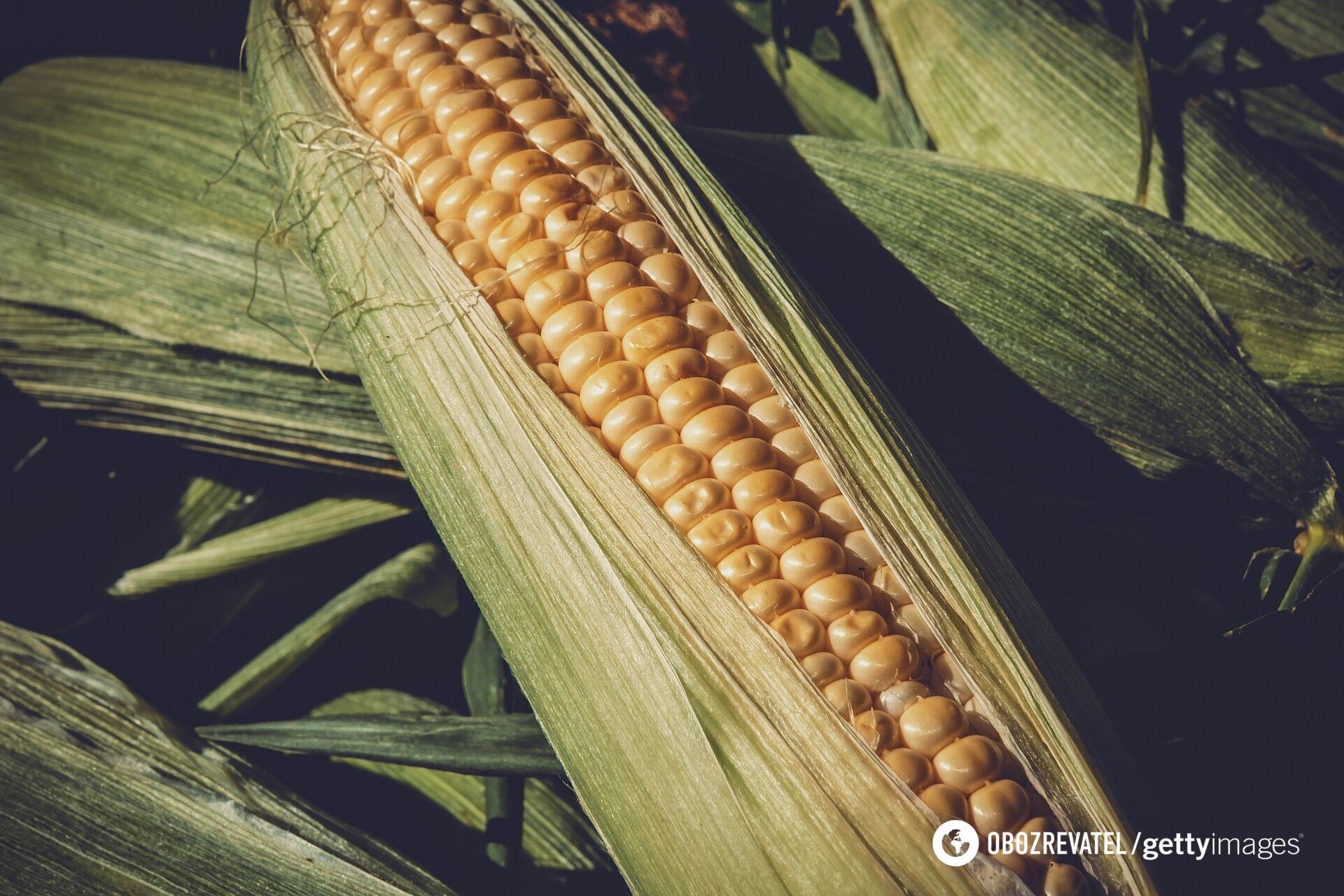 Як законсервувати кукурудзу