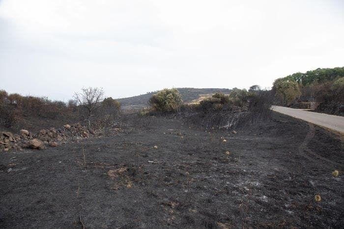 Сообщают также о пожарах на горном хребте Сикана и в Алкамо в провинции Трапани.