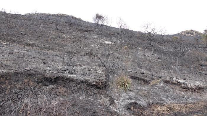 Возобновился пожар в Валь Пескара на центральном востоке материковой части страны.