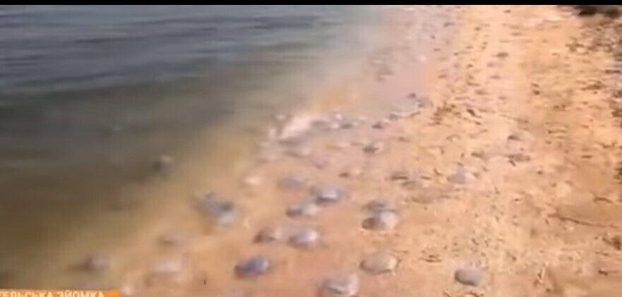 Медузи в Азовському морі