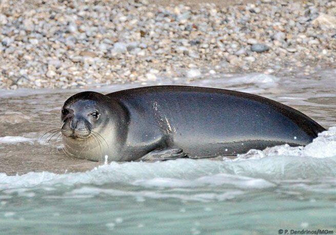 Костис любил лежать на побережье острова Алонисос.