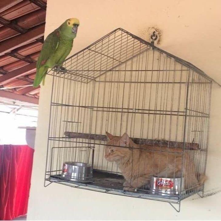 Кіт заліз в клітку папуги