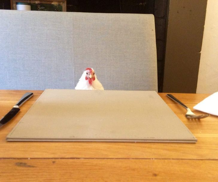 Курочка чекає вечерю