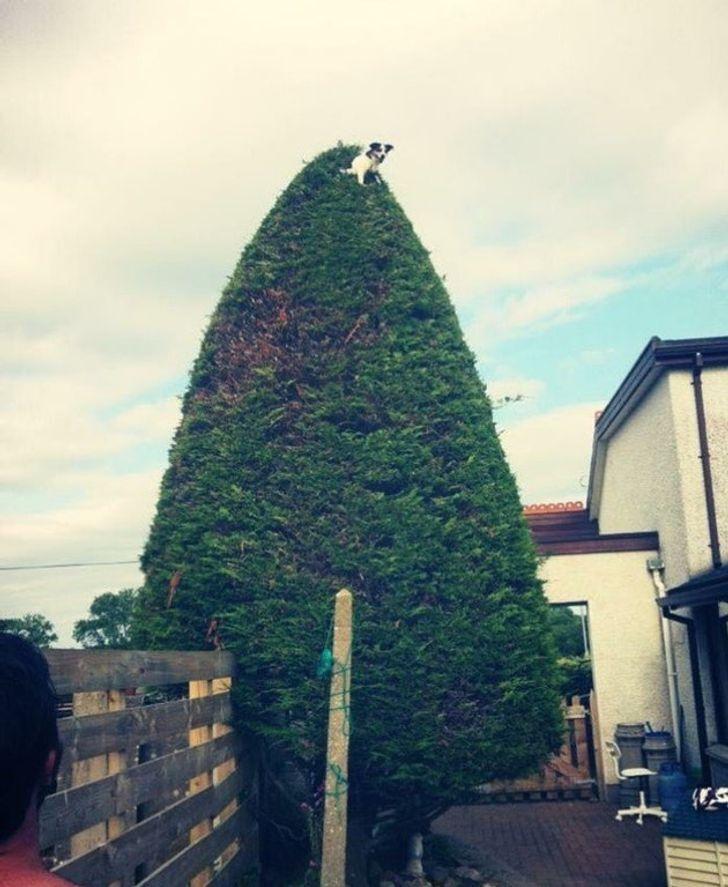 Пес виліз на величезне дерево