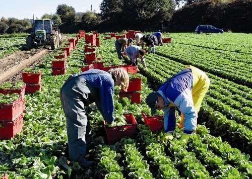 У сільському господарстві в Польщі працює близько 10% українців