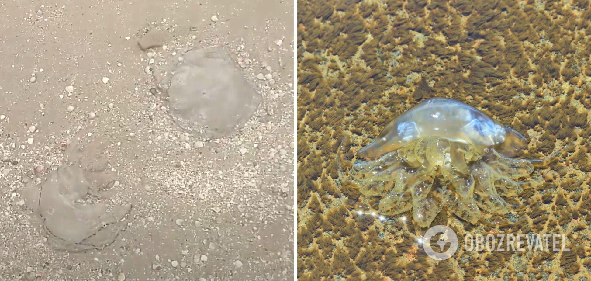 Нашествие медуз в 2021 году