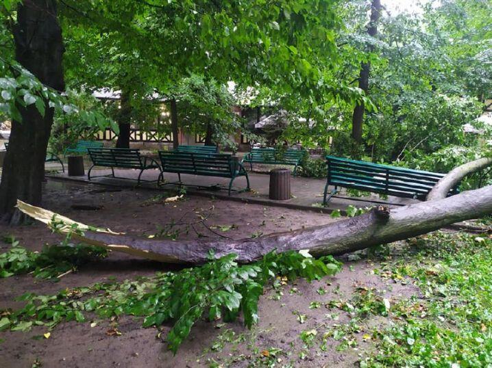 Парк ім. Тараса Шевченка