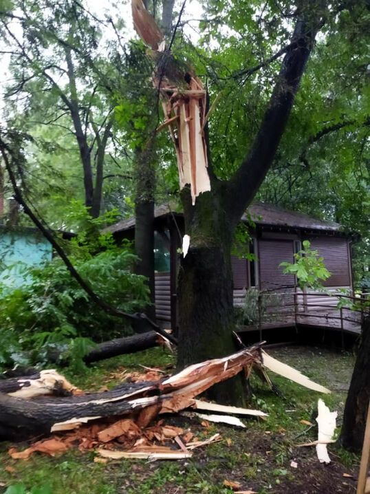 Через негоду деякі дерева зламалися