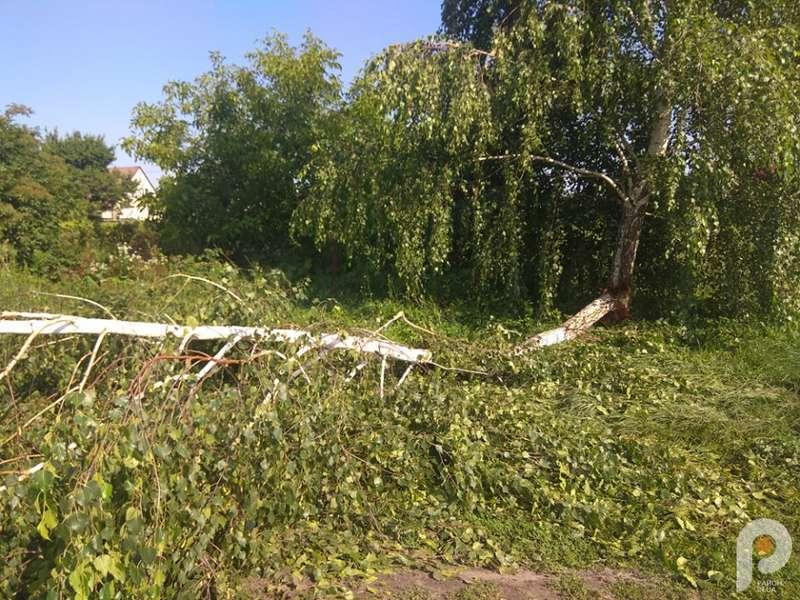 Через повалені дерева на дорозі утворився затор