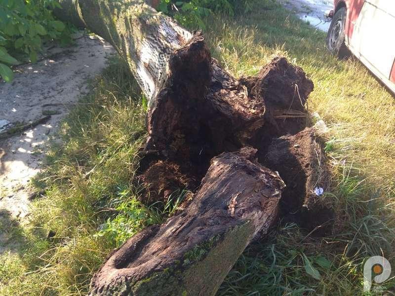 Дерева виривало з корінням