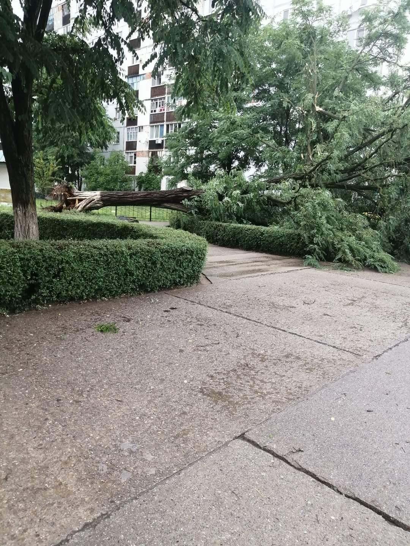У Нетішині шквальний вітер зламав 15 дерев