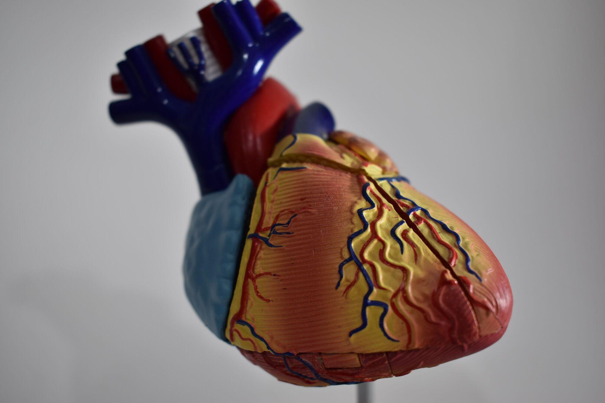 Трансплантаты органов, созданные при помощи 3D-печати, могут появиться в медицине через двадцать лет