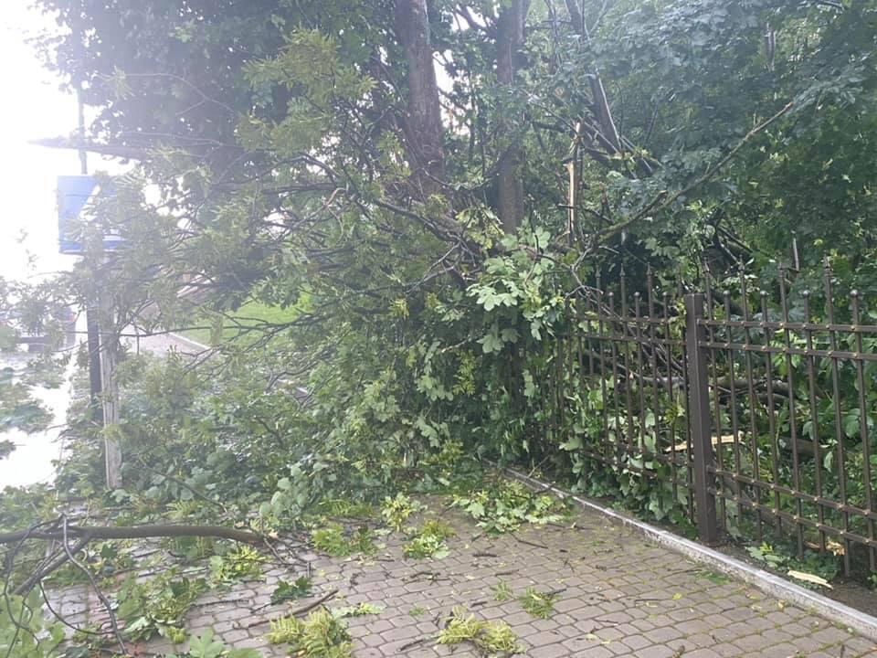Десятки дерев повалені в Надвірній