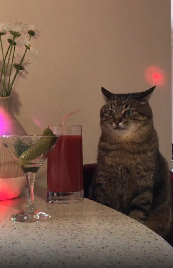 Кот Степан со стаканом томатного сока.
