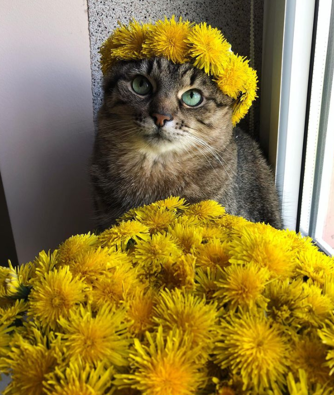 На других фото кот выглядит довольно живо.