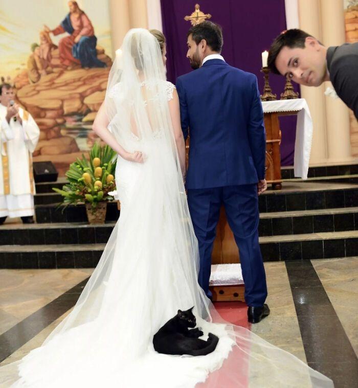 Кот был главным гостем на свадьбе