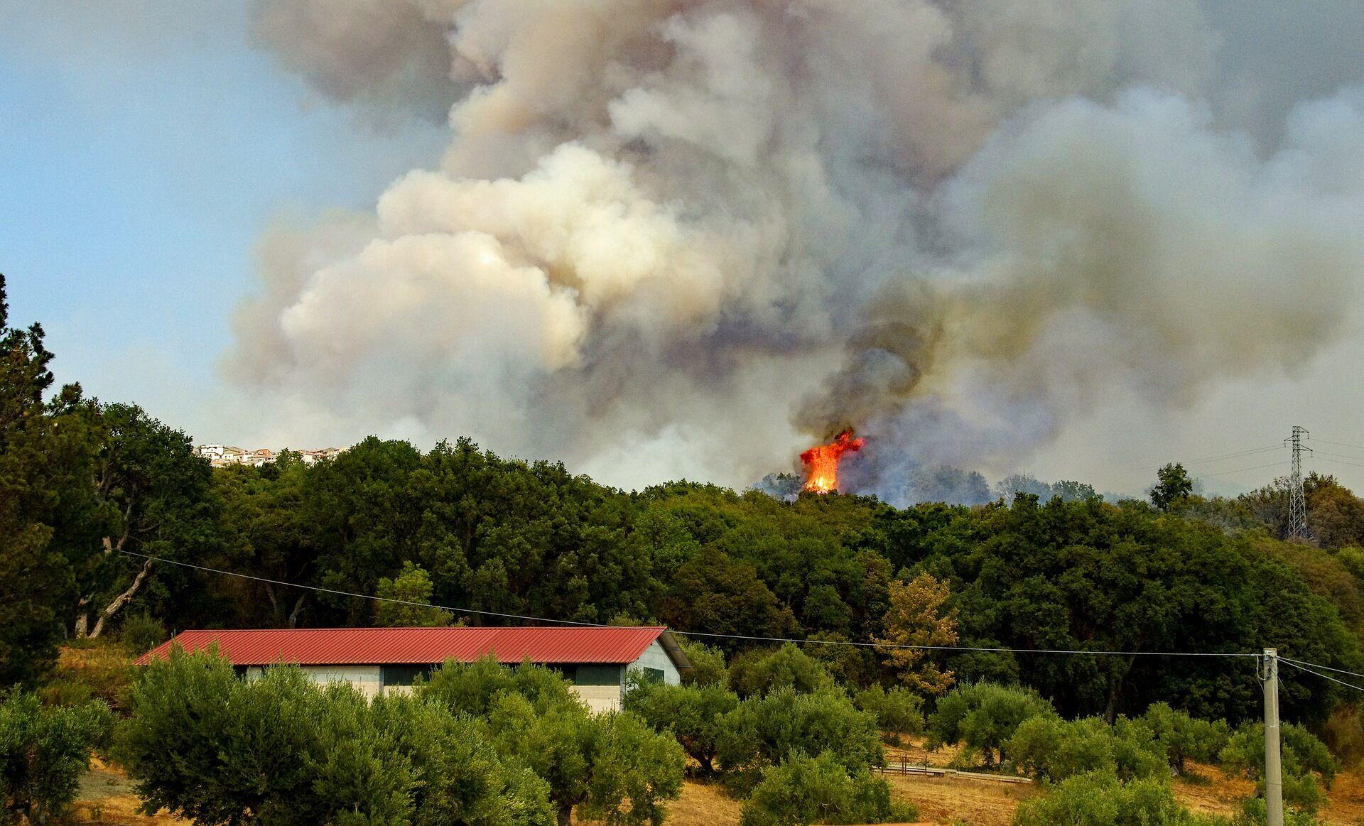 Исследователи зафиксировали рост числа позитивных тестов COVID-19 во время лесных пожаров